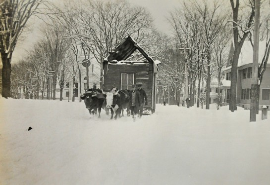 Moving with oxen on Silver Street, approx. 1870-1875.