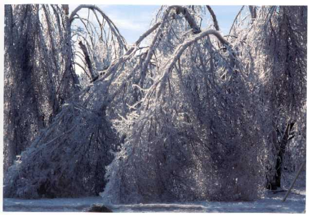 Ice Storm Of 1998 Public Works