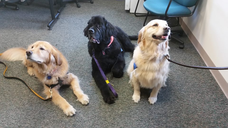 Storytime Special Meet The Therapy Dogs City Of